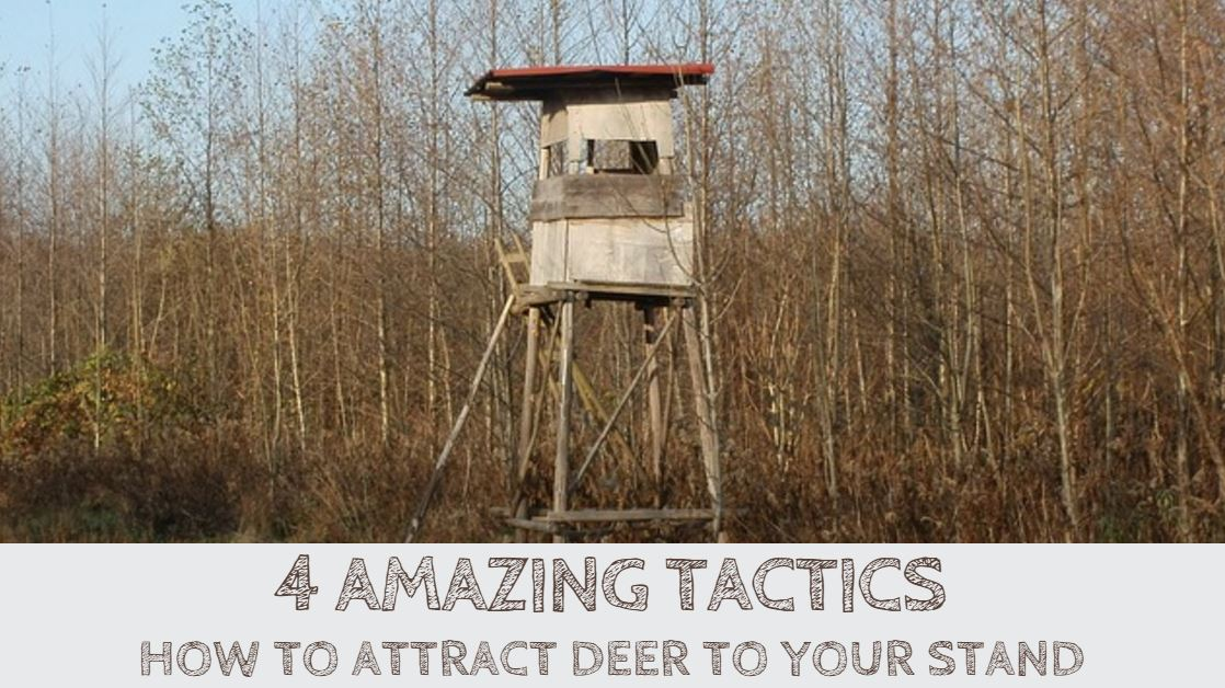 How to Attract Deer to Your Stand (4 Amazing Tactics)