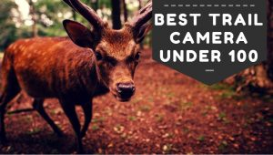 5 Best Trail Camera Under 100 in 2020 – Reviews & Buying Guide