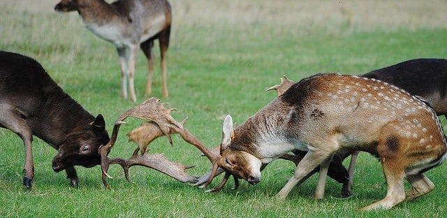 Bucks Battling for Dominance