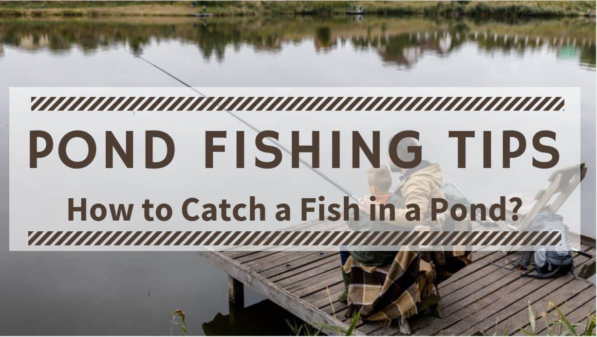 Pond Fishing Tips – How to Catch a Fish in a Pond
