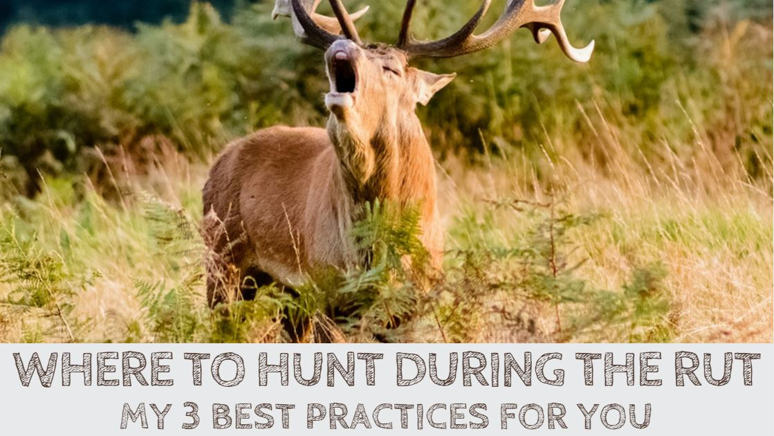 Where to Hunt During the Rut? 3 Pro Tips for You