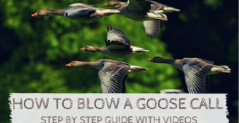 How to Blow a Goose Call – Step by Step Guide and Videos