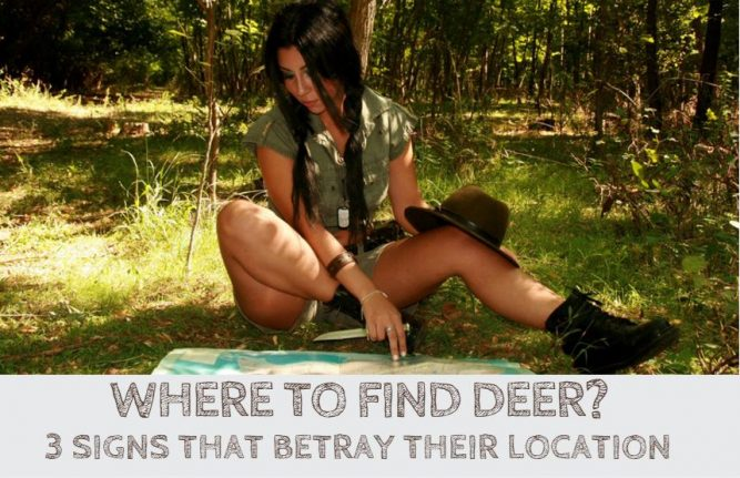 Where To Find Deer