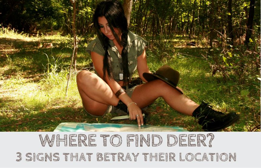 Where To Find Deer? 3 Signs That Betray Their Location