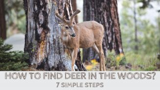 How to Find Deer in the Woods