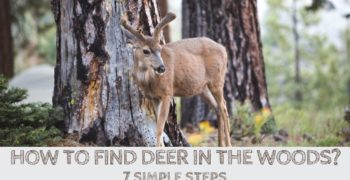 How to Find Deer in the Woods (7 Simple Steps)