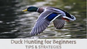 Duck Hunting for Beginners