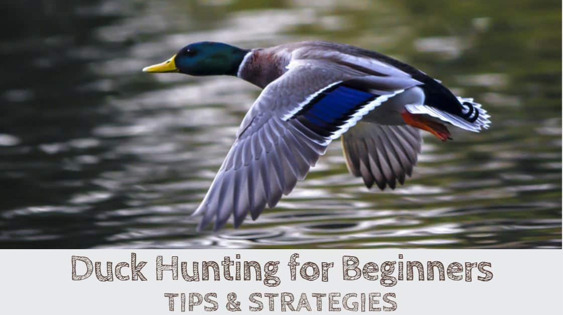 Duck Hunting for Beginners (TIPS & STRATEGIES)