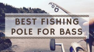8 Best Bass Fishing Rods of 2020 – Reviews & Buying Guide