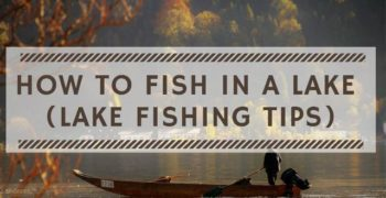 Lake Fishing Tips – How to Catch Fish in a Lake