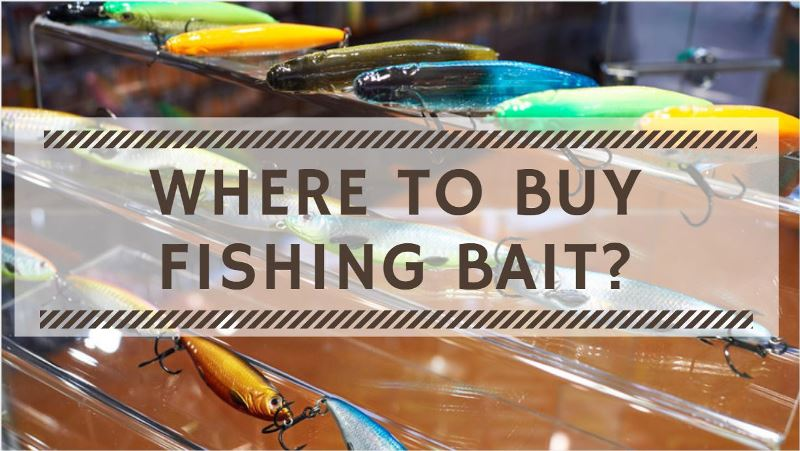 Where to Buy Fishing Bait? Guide to Buy Bait for Fishing