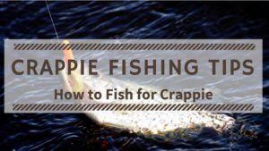 Crappie Fishing Tips for Beginners