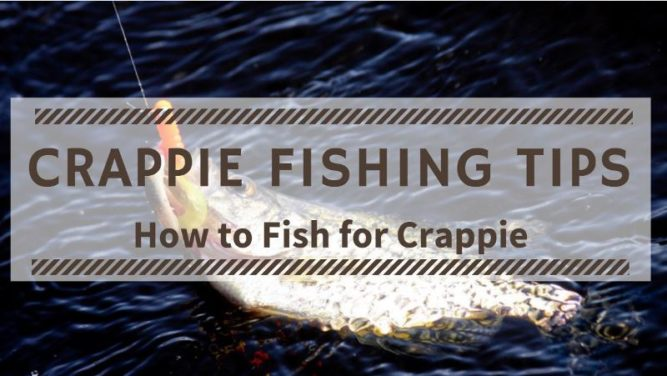 Crappie Fishing Tips. Crappie Fishing Techniques. How to Fish for Crappie. How to Catch Crappie.