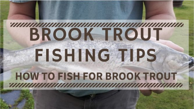 Brook Trout Fishing Tips